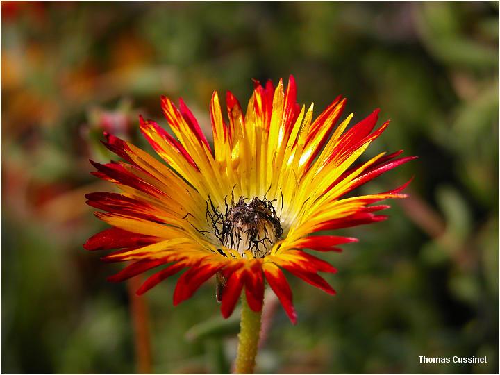 Thomas cussinet webphoto accueil la faune et la flore saint jean de beauregard f te des - Fete des plantes saint jean de beauregard ...